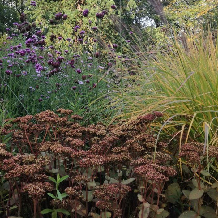 Prachtige herfstcombi van sedum, siergrassen en verbena